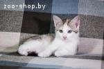3х-цветный котёнок на счастье