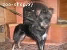 Бородулька Ляля - молоденькая собачка в дар , в добрые руки!