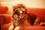 Дора, небольшая и очень умная собачка ищет дом