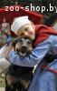 Джек – чудный пес в любящие руки!