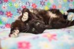 Фантик- ласковый котик в дар