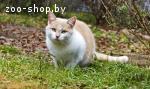 Кекс- самый сладкий кот