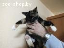 Котенок в дар, в добрые руки!