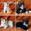 Котята-девочки трехцветка и чернушка в дар!!
