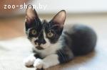 Помогите котятам найти постоянный дом