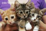 Котята Ищут Новых Хозяев!