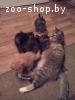 Котята в дар хорошим людям