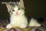 Котятки в добрые руки