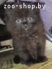 Красивые котятки в дар