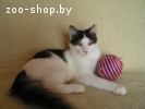 Молоденький котик в дар, в добрые руки!