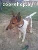 Найдена собака, д. Марковщина, Логойский р-н