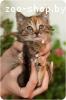 Очаровательные котодетки в добрые руки!