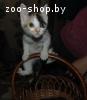 Очаровательные котята в дар