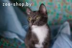 Однух — котенок в носочках в дар