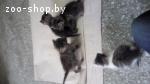 помогите спасти котят