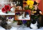 Прекрасные питомцы волонтёров, котята-малыши от 2-х месяцев