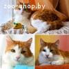 Рыжик- рыжий кот в дар!!!