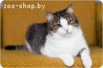 Шанхай-прекрасная кошка в дар!