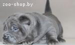 Шарпей щенки