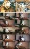 щенки аляскинского маламута