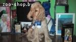 щенок английского кокер спаниеля
