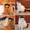 Сонька –кошка c добрым характером !!!
