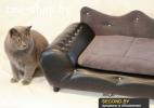 Стильные диванчики для вашего питомца.