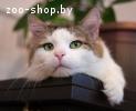 Тайфун - самый ласковый кот на свете в дар