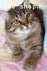 Вальяжный, степенный котик Швепс в дар!