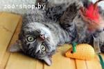 Жмурка-плюшевая тигровая кошечка в дар