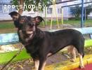 Боня - небольшая собачка ищет дом