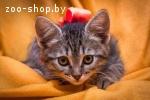 Двухмесячный котенок-девочка в добрые руки