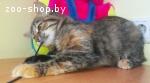 Кошечка ищет дом