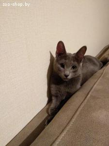 Кошки/вязка