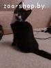 Котенок 2,5 месяца в дар. Кот.