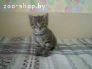 Котенок срочно ищет дом!!!