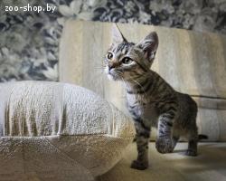 Котёнок в дар