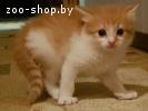 Котята в дар в добрые руки