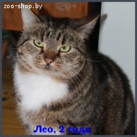 Лео-мраморный тиграша