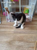 найденыши котята
