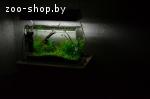 Обустройство, обслуживание аквариумов / прудов