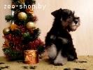Очаровательные и породные щенки цвергшнауцер черный с серебр