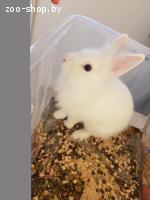 Отдам кролика