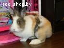 Подарю декоративного кролика
