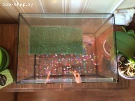 Террариум для земноводной черепахи